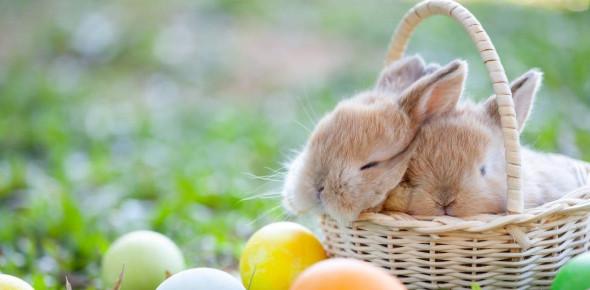 Easter Vocabulary Quiz! Trivia Questions!