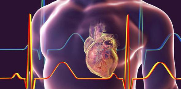 The Heart: Multiple Choice Test! Trivia Quiz