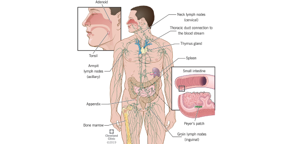 The Lymphatic And Immune System Quiz