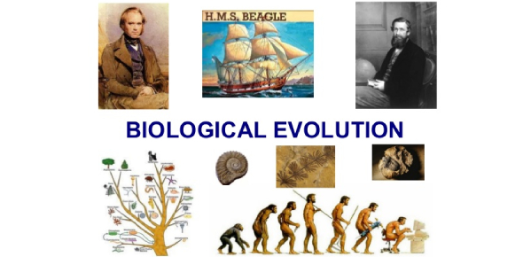 Biological Evolution MCQ Quiz! Trivia