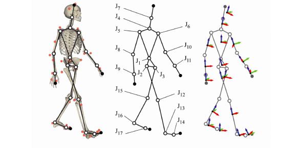 Biomechanics Ultimate Exam: Quiz!