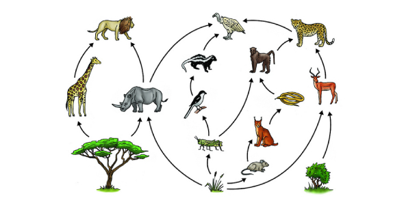 Are You Ready To Take The Food Chain Trivia Quiz?