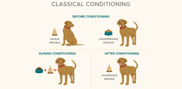 Classical Conditioning Quiz! Trivia Questions