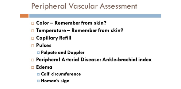 Assessment Peripheral Vascular And Lymphatics System