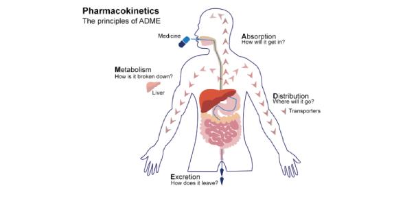 Pharmacokinetics Questions Quiz! Trivia Test