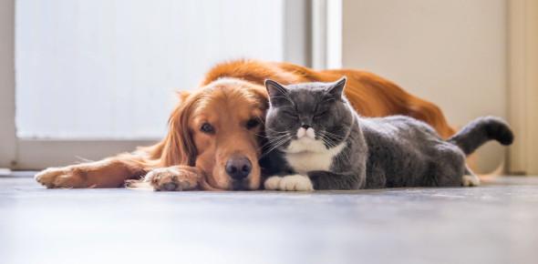 Rit Trivia: Cat & Dogs