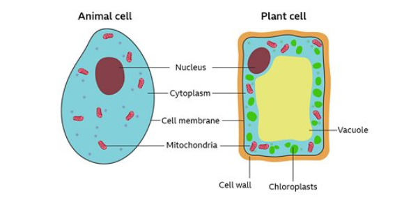 IGCSE Biology Quiz On Plant And Animal Cells!