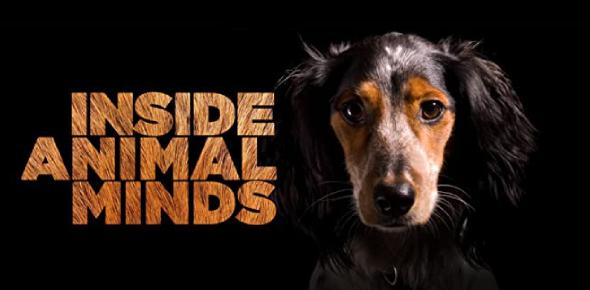 Trivia Quiz: Inside Animal Minds!