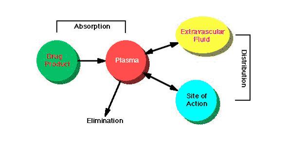 Pharm Tech Chapter 10 (Basic Biopharmaceutics)