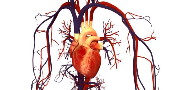 Circulatory System Trivia: MCQ Quiz!