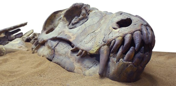 Trivia On Fossils: MCQ Quiz!