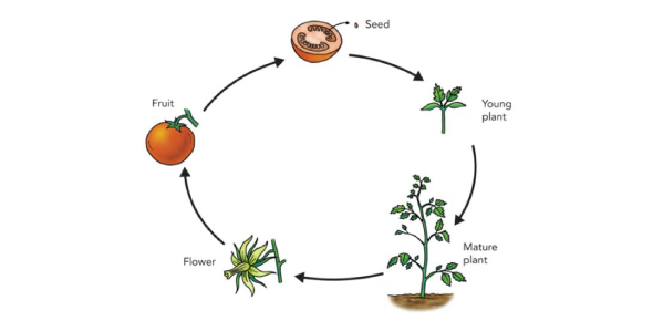 How Much Do You Know About Plant Life Cycle?