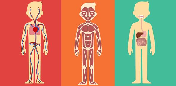 Body Systems Quiz 1