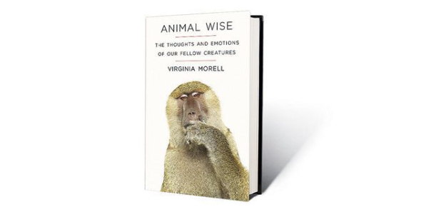 Animal Wise Book By Virginia Morell! Trivia Quiz