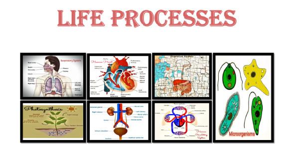 Biology Quiz On Life Processes! Trivia