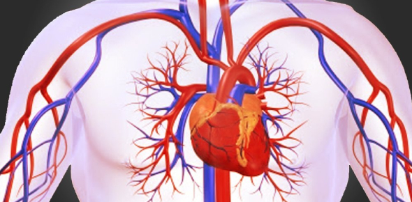 Circulatory System Quiz Questions Test: Trivia!