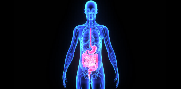 Body System Quiz MCQ! Trivia