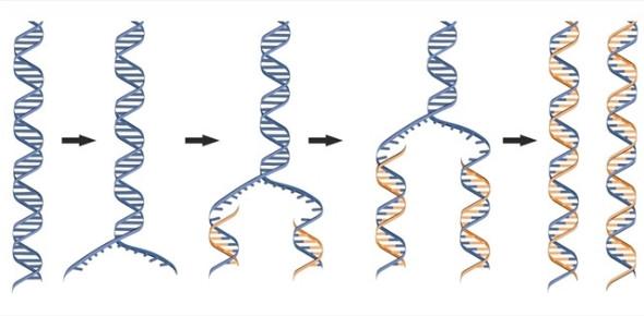 DNA Shape And Replication Quiz! Trivia