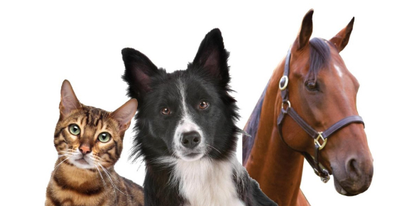 What Animal Are You? Horse Dog Cat