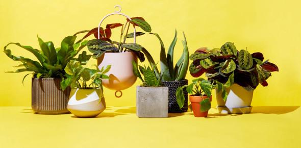 Test On Plants! Trivia Knowledge! Quiz