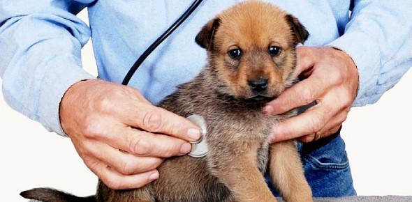 A Quiz On Dog Health! Trivia