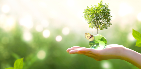 World Environment: Trivia Quiz!