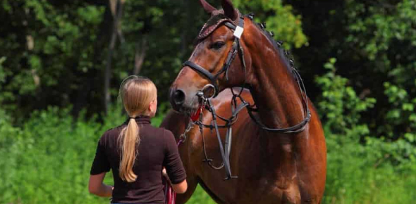 What Colour Would You Be If You Were A Horse??