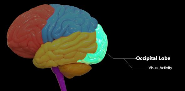 Central Nervous System Stimulants