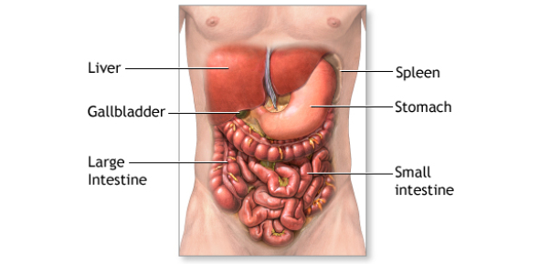 Abdomen A- The Aorta And Its Branches