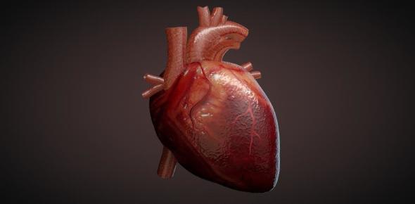 Interesting Heart Facts: Quiz! Trivia