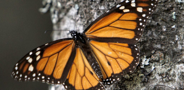 Are You A Butterfly Expert?