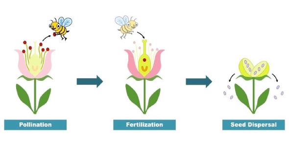 Pollination Flower Fertilization Quiz Questions