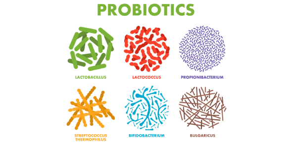 How Well You Know Probiotic Bacteria? Quiz