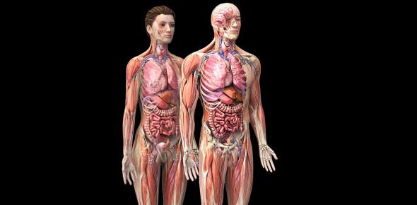 Basic Human Anatomy: Practice Test! Quiz - ProProfs Quiz