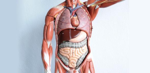 Ultimate Anatomy Exam Quiz! Trivia
