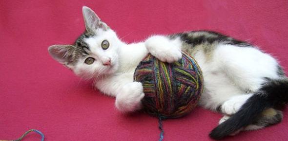 Quiz: Cats Domestic Animals! Trivia
