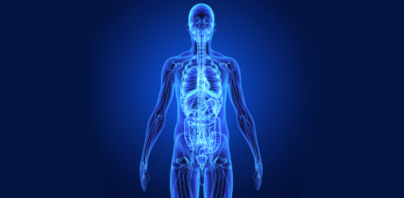 Human Anatomy And Chemical Process: Quiz!