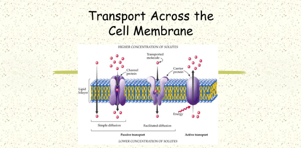 Transport Across The Cell Membrane! Trivia Quiz