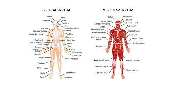 Quiz: The Skeletal And Muscular System! Trivia