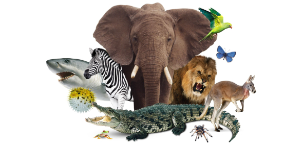 Find Out The Animal You Are Quiz!