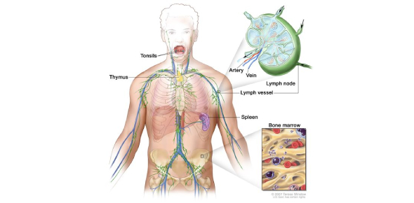 Lymphatic System Quiz: How Much You Know?