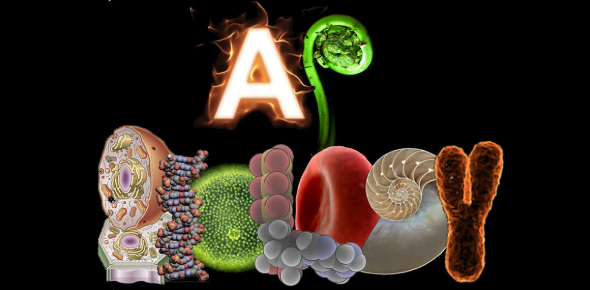 A.P. Biology Chapter 2 (Chemistry Review)