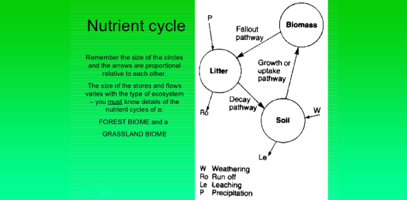 Trivia Quiz On Ecology Nutrient Cycles And Succession!