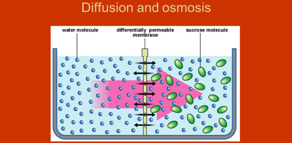 A Quiz On Diffusion And Osmosis!