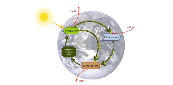 Biogeochemical Cycle Quiz: Trivia!