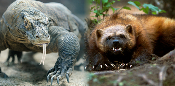 What Kind Of Animal Are You? Unlimited Fun Quiz