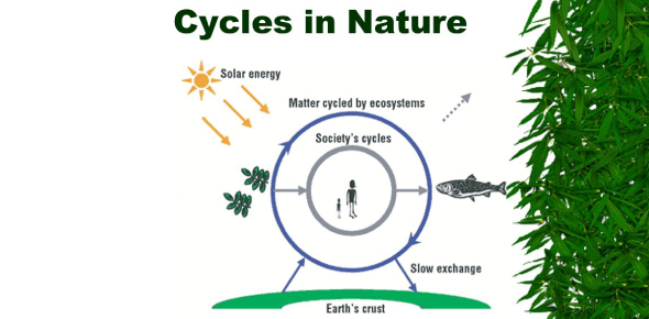 Ecology Quiz: Cycles Of Nature! Trivia