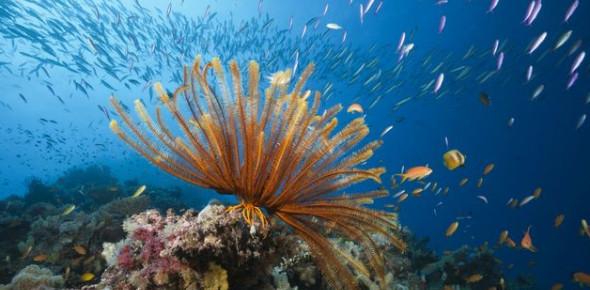 Quiz: The Great Barrier Reef Of Australia!