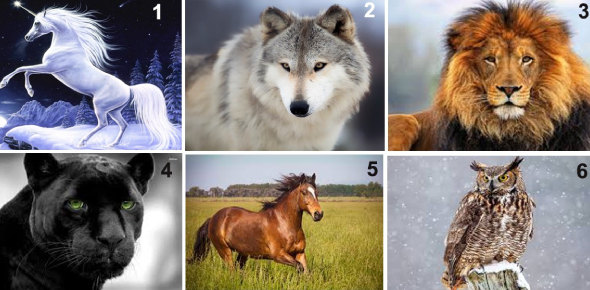 Quiz: What Is The True Animal Spirit Within You?