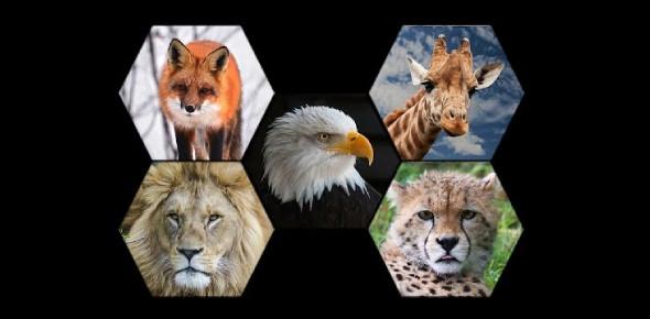Pets And Wild Animals Trivia Quiz